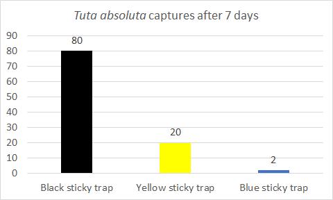 Tuta absoluta graph